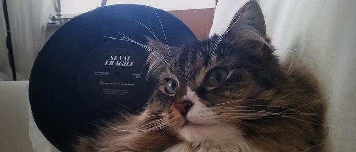I brist på nytagna pressfoton på Seval får ni här en bild på Fragile och katten Lola ... Foto: Johan Jacobsson